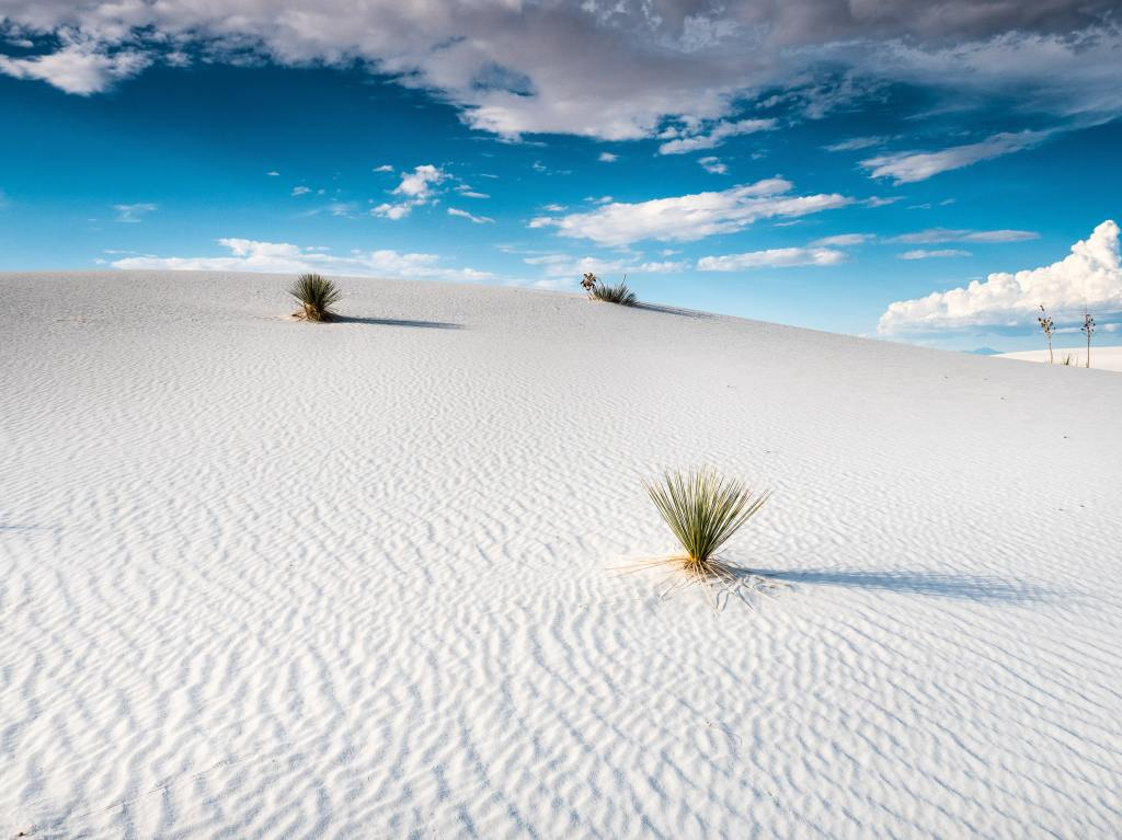 white sand dunes with sporadic green plants and blue sky