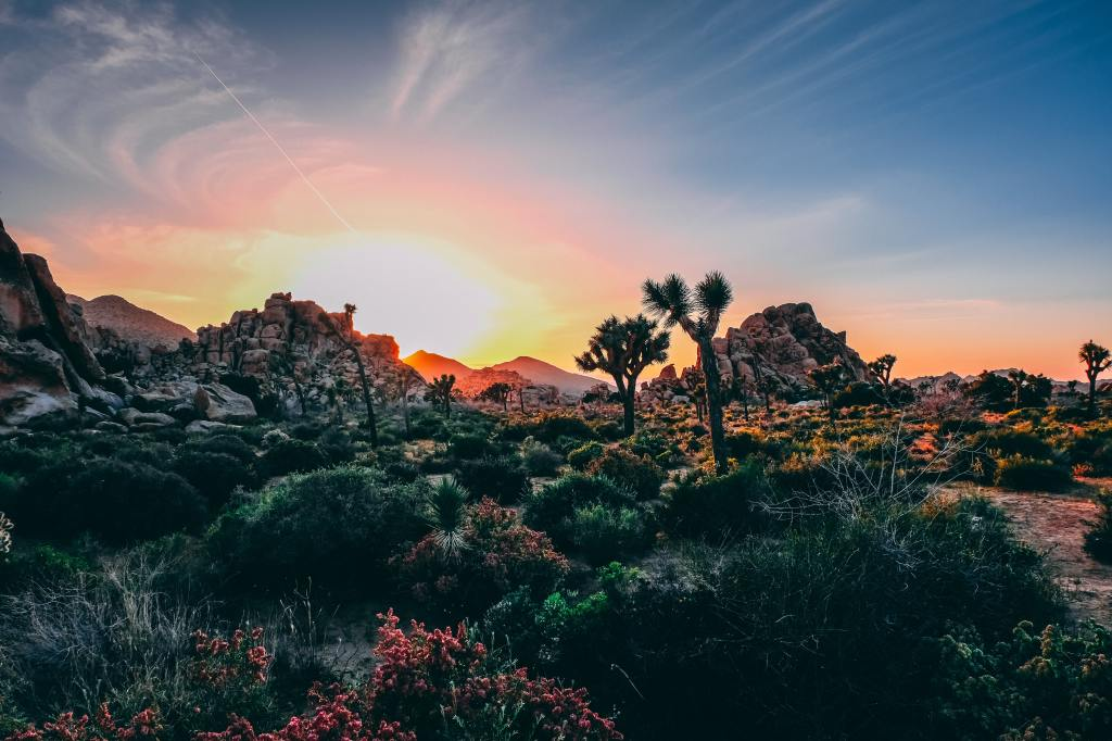 desert with green vegetation and cactus in foreground with large sunset in background